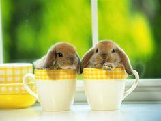 ...bunnies