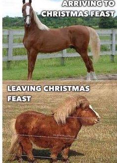 Its the season for stretchy pants. : funny - Horses Funny - Funny Horse Meme - - Its the season for stretchy pants. : funny The post Its the season for stretchy pants. : funny appeared first on Gag Dad. Funny Horse Memes, Funny Horse Pictures, Funny Animal Jokes, Funny Horses, Cute Horses, 9gag Funny, Cute Funny Animals, Funny Dogs, Horse Humor