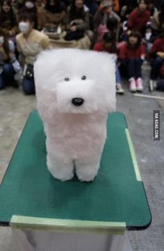 So there is a trend in Japan to shave dogs' fur into cubes...