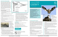 Living with wildlife : Osprey (Pandion haliaetus), by the Oregon Department of Fish and Wildlife