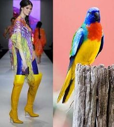 A fashion blogger, Trend de La Creme, does a wonderful job of matching the colors and styles in the fashion world with the colors and styles in the aviary world.