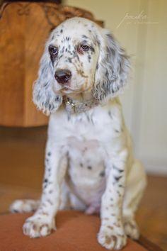 Lucky Fiona puppy collar.