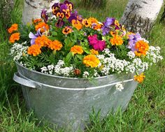 flowers+garden+with+marigolds+and+ | Explore edible flowers - many of the plants you will use for ...