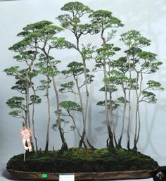 Unique forest Bonsai style displayed in Malaysia.    By: Matyie Che Makhtar