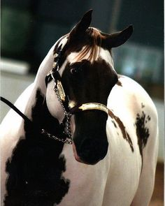 Never seen a Paint horse with a face like this! By Brooks Paints And Quarter Horses All The Pretty Horses, Beautiful Horses, Animals Beautiful, Cute Animals, Unique Animals, Stunningly Beautiful, Horses And Dogs, Wild Horses, Zebras