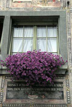 harvestheart:The Glory of Swiss Flowers - Kartik Pashupati