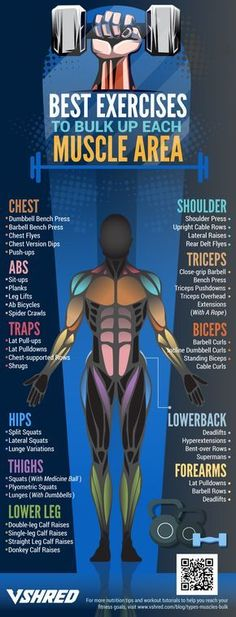 11 Types of Muscles That You Can Bulk Up is part of health-fitness - Which types of muscles would you like to bulk up If you want everything to get bigger, you must first know the basic types of muscles you need to work on Mental Health Articles, Health And Fitness Articles, Health Fitness, Fitness Diet, Health Advice, Health Diet, Boxing Fitness, Men Health, Fitness Weightloss