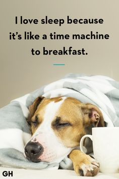 ❤️Hit That Share Button To Motivate Your Friends  Family❤️ ▬▬▬▬▬▬▬▬▬▬▬▬▬▬▬▬▬▬▬ #MondayMotivation #MotivationMonday #quotes  #quoteoftheday  #motivationalquotes  #PuppyLove  #PawPrints #Happiness #LancasterPuppies www.LancasterPuppies.com Puppy Quotes, I Love Sleep, Lancaster Puppies, Felt Hearts, Puppies For Sale, Monday Motivation, Puppy Love, Quote Of The Day, Dog Lovers