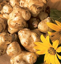 Also known as sunchoke, Jerusalem artichoke is a perennial sunflower grown for its tender, sweet tubers. Ships for fall planting. Perennial Vegetables, Root Vegetables, Veggies, Jerusalem, Artichoke Flower, Herb Seeds, Garden Seeds, Organic Seeds, Gardens