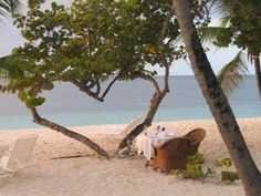 Heart shaped tree. We were here at Palm Island in the Grenadines for our honeymoon !