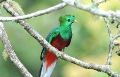 #Quetzal bird #travel #costa rica