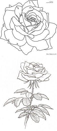 Королева- роза..