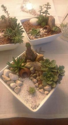 Succulent Gardening, Garden Terrarium, Succulent Terrarium, Planting Succulents, Cactus House Plants, Herb Garden Design, Miniature Fairy Gardens, Plant Decor, Flower Pots