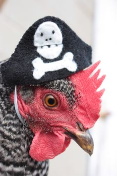 Ba-Gawks: Chickens in tiny hats: Gobias the pirate