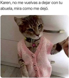 Karen Memes, Memes Estúpidos, Mexican Memes, Funny Short Videos, Fancy Cats, Miraculous Ladybug Memes, Dog Clothes Patterns, Cool Pets, Animal Memes