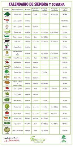 Aqui podemos ver cuales son las fechas en las que se da el cultivo de cada planta.  -Paula Covarrubias 14 mayo