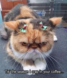 Top 10 Cat-mas Holiday Memes | My Cat is Spoiled