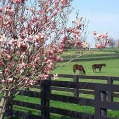 Horse farms of KY