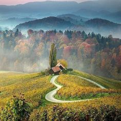 Heart shaped road, amidst the vineyards in the village of Spicnik, Slovenia.