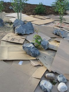 Turning a grassy yard into a forest bed with cardboard and mulch. Reduces water usage and makes a unique front yard. Xeriscaping is fun! Landscaping With Rocks, Front Yard Landscaping, Landscaping Ideas, Backyard Ideas, Backyard Designs, Garden Ideas, Inexpensive Landscaping, Outdoor Ideas, Outdoor Decor