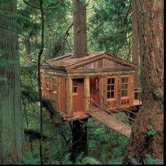 Seattle tree house