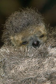 Cute animal pictures: 100 of the cutest animals! - Cute animal pictures: 100 of the cutest animals! Pictures Of Sloths, Cute Sloth Pictures, Cute Creatures, Beautiful Creatures, Animals Beautiful, Baby Animals, Cutest Animals, Funny Animals, Reptiles