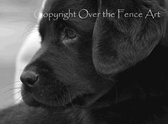 Black Labrador Puppy Fine Art Photo Greeting by overthefenceart