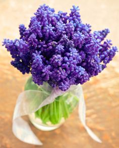 images for best cutting flowers for garden - Google Search