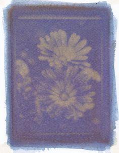 Purple Cabbage Anthotype / Antotipo de Repollo morado By Katalina Fuentes (Kata Efe)