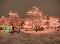 Pink Christmas love it