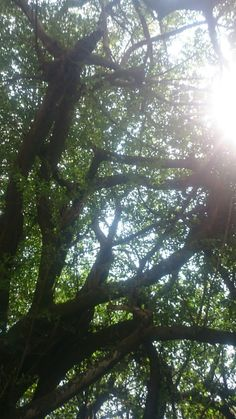 Beautiful canopy