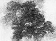 Le Grand chêne de Saint Sylvestre - Alexandre Hollan . 2015 Fusain sur papier (60x80cm)