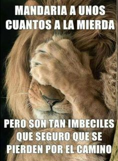 Tribe of JUDAH wake up. I AM, the ONLY name of the God of Abraham Isaac and Jacob given unto MOSES himself in Exodus unto ALL generations. Funny Phrases, Funny Quotes, Funny Memes, Memes Humor, Spanish Jokes, Tribe Of Judah, Lion Of Judah, Christianity, Bible Verses
