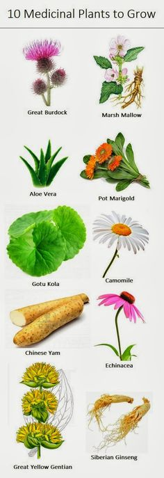 Medicinal Plants to Grow...I'm not pushing any of these plants, just trying to show that there are benefits in using them::))