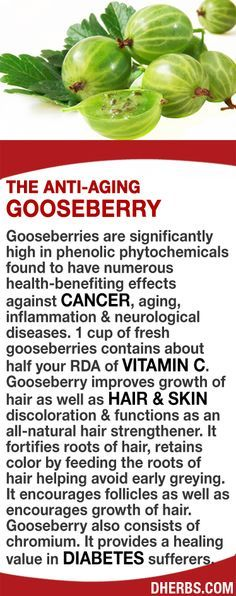Gooseberries are significantly high in phenolic phytochemicals found to have numerous health-benefiting effects against cancer, aging neurological diseases. The berries are high in Vitamin C. Gooseberry improves growth of hair, hair skin discoloration functions as an all-natural hair strengthener. It fortifies roots of hair, retains color by feeding the roots helping avoid early greying. Gooseberry also consists of chromium providing healing in diabetes sufferers.