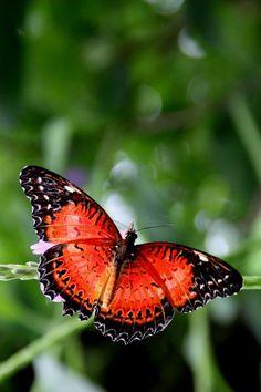 Butterfly by Felix Rohrbach