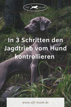 Anti-hunting training for your dog - Hund Rhodesian Ridgeback, Dog Corner, Dog Hacks, Medical History, Dog Paintings, Hunting Dogs, All Dogs, Dog Life, Dog Training