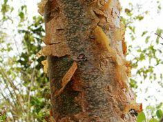 Toutes les tailles | COSTA RICA 268b (Copier) | Flickr: partage de photos!
