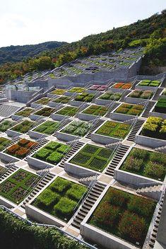 Terraced gardens, Japan