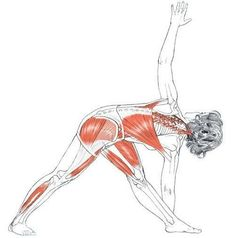 gluteal muscles color diagram  google search  glutes