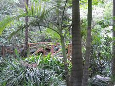 Camellia Gardens is located at Caringbah in the Sutherland Shire. The gardens are absolutely stunning. Ideal place for a picnic and popular for weddings. Parks In Sydney, Naming Ceremony, Absolutely Stunning, Beautiful, Camellia, Garden Wedding, Perfect Place, Places To Go, Picnic