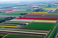 Het is een bijzonder spel van kleuren en lijnen, als je vanuit de lucht naar de Hollandse bollenvelden kijkt. FotograafNormann Szkop maakte foto's vanuit de lucht. Magisch.