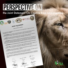 Important Perspective - Joint Statement on Captive Bred Lion Shooting by Ron Thomson To put this important newsletter into perspective: The TGA is not a hunting association of any kind. We do, however, support hunting as a management tool for the sustainable-use harvesting of South Africa's renewable wild living resources. We do not consider wildlife to be a 'sacred cow', but a WILD 'product of the land' that equates to domesticated animals and cultivated crops being TAME (or DOMESTIC)… South Africa, Perspective, Cow, Hunting, Wildlife, Management, Animals, Products, Animales