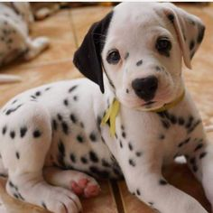 Any dogs and puppies that are cute. See more ideas about Cute Dogs, Cute puppies Tags: Really Cute Puppies, Super Cute Puppies, Cute Dogs And Puppies, Baby Dogs, Pet Dogs, Dog Cat, Pets, Doggies, Cute Little Animals