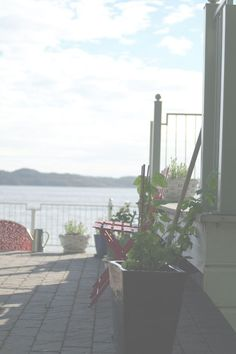 http://eliogbella.blogspot.no/2013/06/humle-klatreplante.html