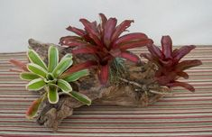 Table centerpiece / decoration with bromeliad, airplant, natural wood Driftwood Centerpiece, Driftwood Planters, Tropical Centerpieces, Table Centerpieces, Patio Table, Air Plants, Natural Wood, Zen, Garden Ideas