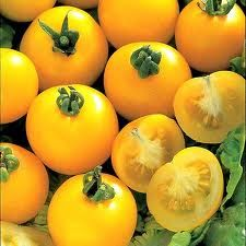 plants for sale near me Yellow Perfection - tomat Gelbe Vollkommenheit - Tomate Fruit And Veg, Fruits And Veggies, Vegetables, Tomato Plants For Sale, Tomato Growers, Exotic Cars For Sale, Rinder Steak, Heirloom Tomatoes, Plant Sale