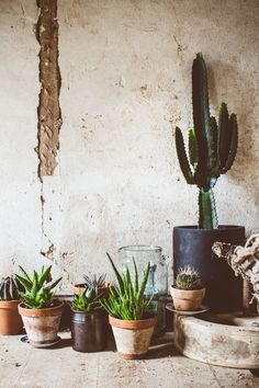 Cactus family and cute indoor plants on exposed concrete wall