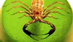 How to prevent scorpions