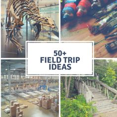 50+ Field Trip Ideas (This list goes beyond just your typical zoo and museum ideas!)   #education #homeschool #homeschooling